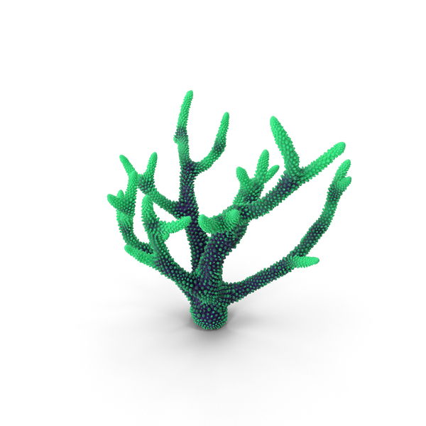 Coral Green1 PNG & PSD Images