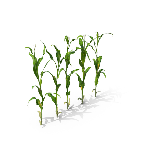 Corn Row PNG & PSD Images