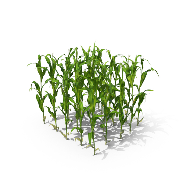 Corn Stalks and Patch PNG & PSD Images