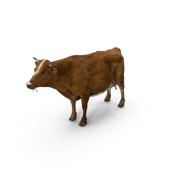 Cow Red PNG & PSD Images