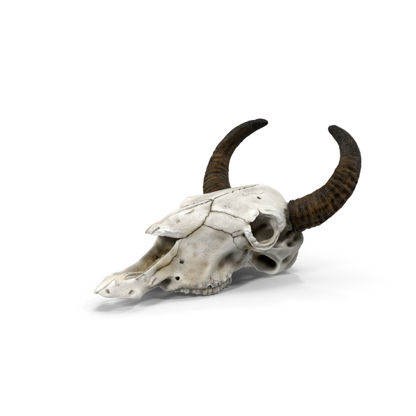 Animal: Cow Skull PNG & PSD Images