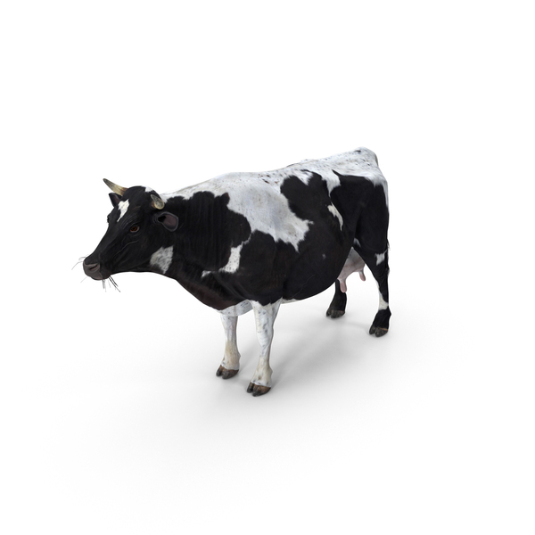 Cow Spotted PNG & PSD Images