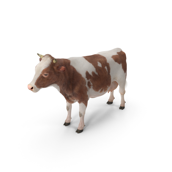 Cow with Fur PNG & PSD Images