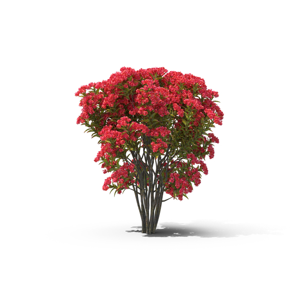 Crepe Myrtle Object