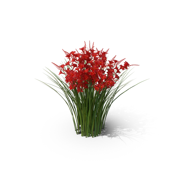 Flowering Plants: Crocosmia PNG & PSD Images