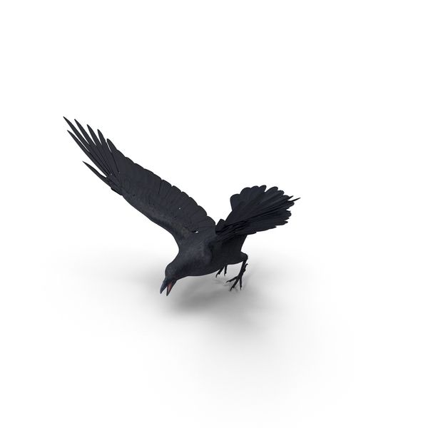 Crow Flapping Wings Object