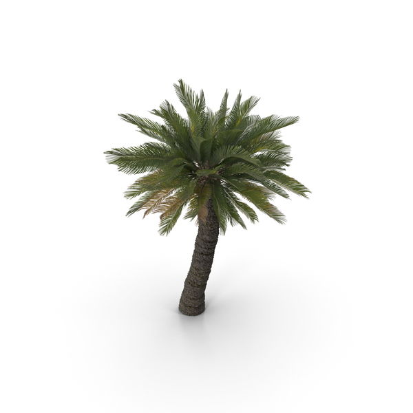 Cycad BroodBoom PNG & PSD Images