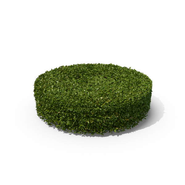 Bush: Cylindrical Hedge Shrub PNG & PSD Images