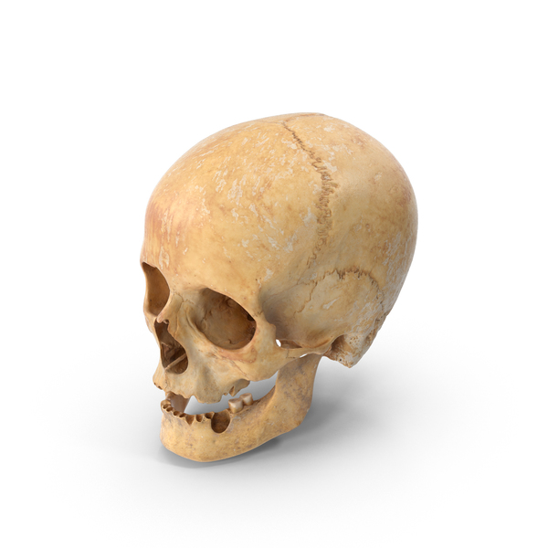 Damaged Human Female Skull PNG & PSD Images