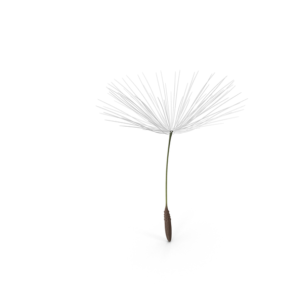 Dandelion Seed PNG & PSD Images