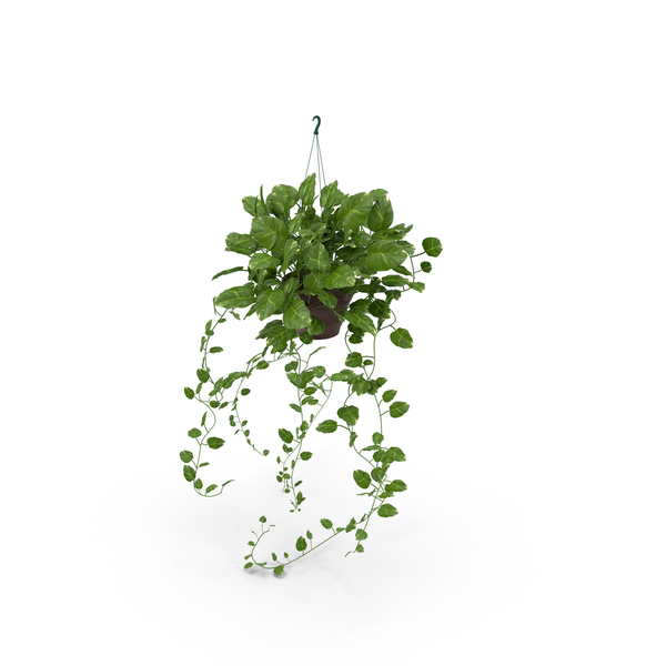 Dangling Ivy in Red Pot PNG & PSD Images