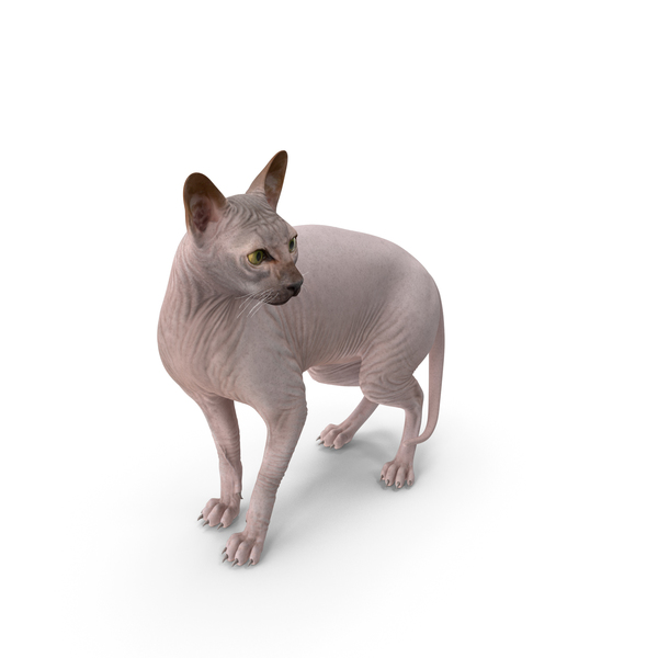 Dark Solid Color Sphynx Cat PNG & PSD Images