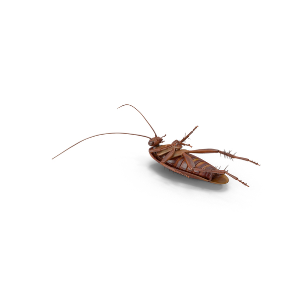 Dead Cockroach PNG & PSD Images