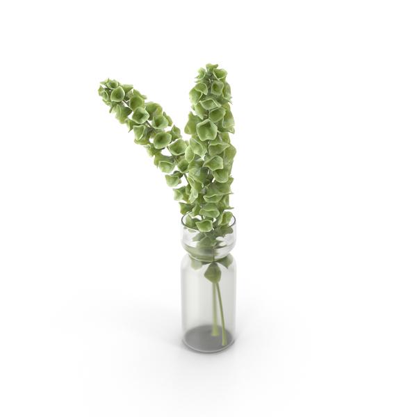 Decorative Plant PNG & PSD Images