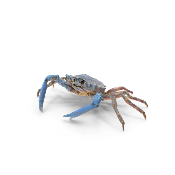 Decorator Crab PNG & PSD Images