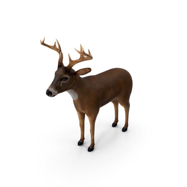 Deer PNG & PSD Images