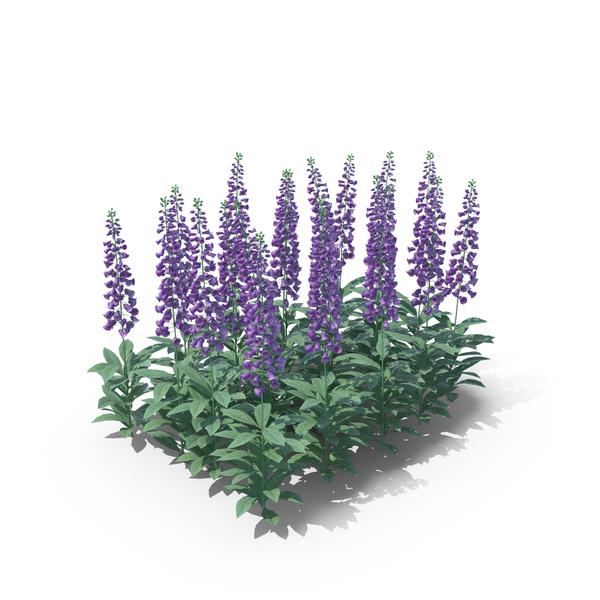 Digitalis Violet PNG & PSD Images