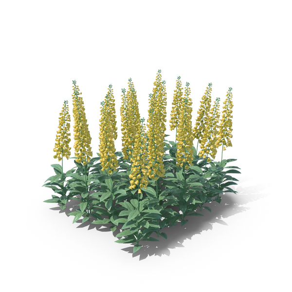 Digitalis Yellow PNG & PSD Images