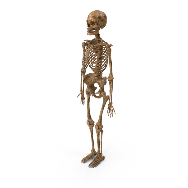 Male: Dirty Skeleton PNG & PSD Images