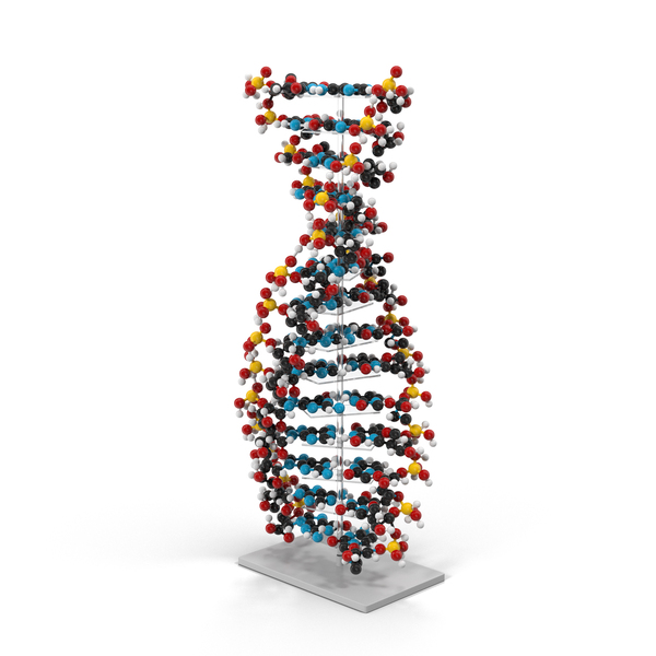 DNA Model PNG & PSD Images