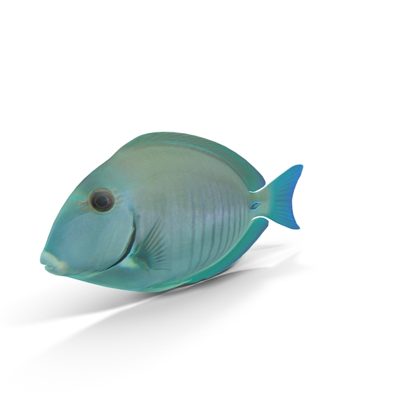Fish: Doctorfish PNG & PSD Images