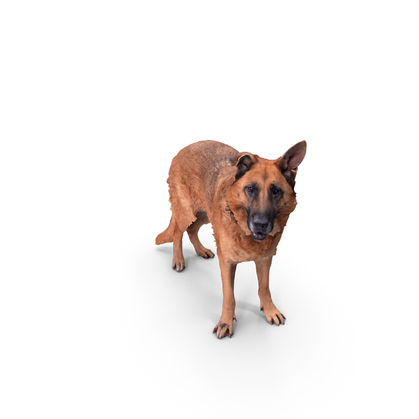 German Shepherd: Dog Posed PNG & PSD Images
