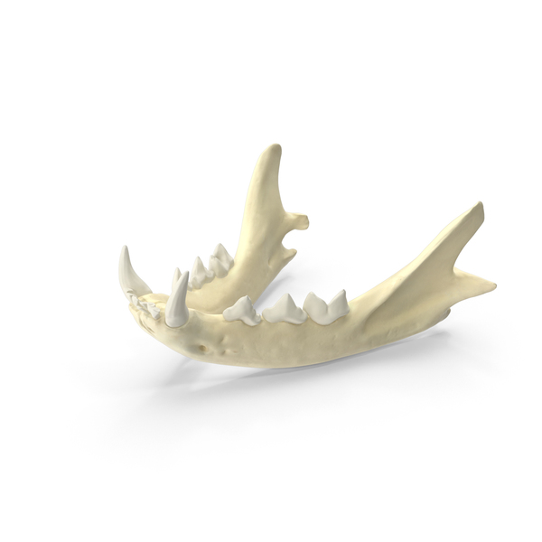 Domestic Cat Jaw PNG & PSD Images