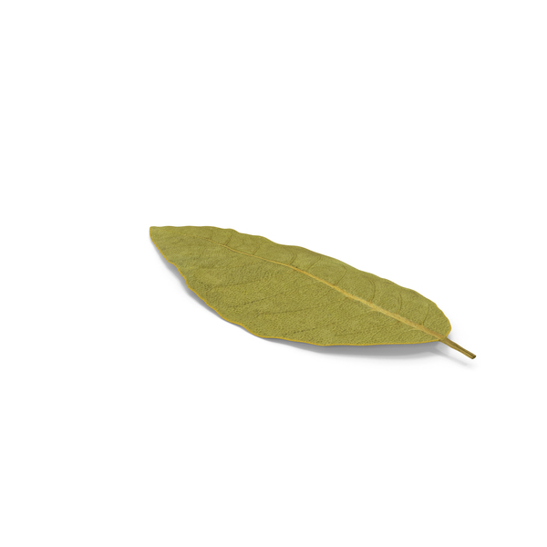 Dried Bay Laurel Leaf PNG & PSD Images