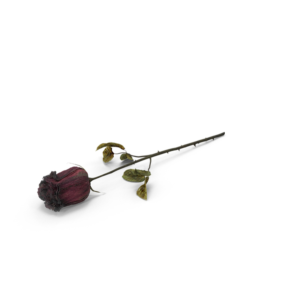Dried Rose Object