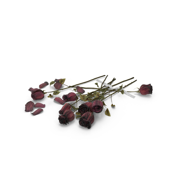 Rose: Dried Roses PNG & PSD Images