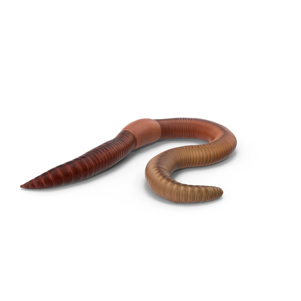 Earth Worm PNG & PSD Images