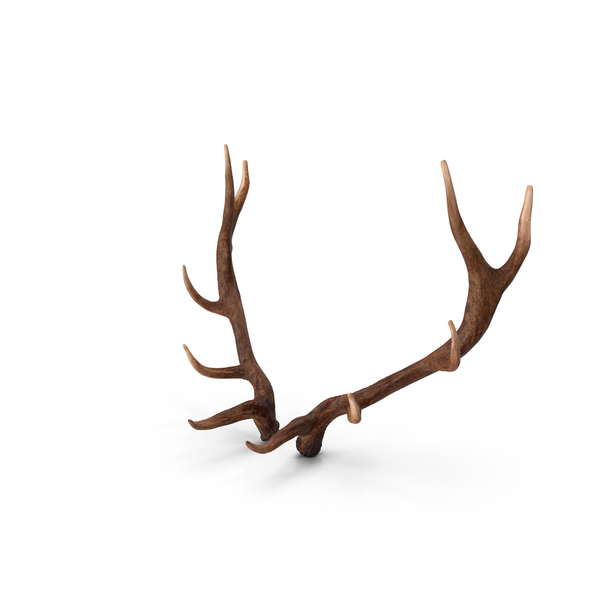 Elk Antlers PNG & PSD Images