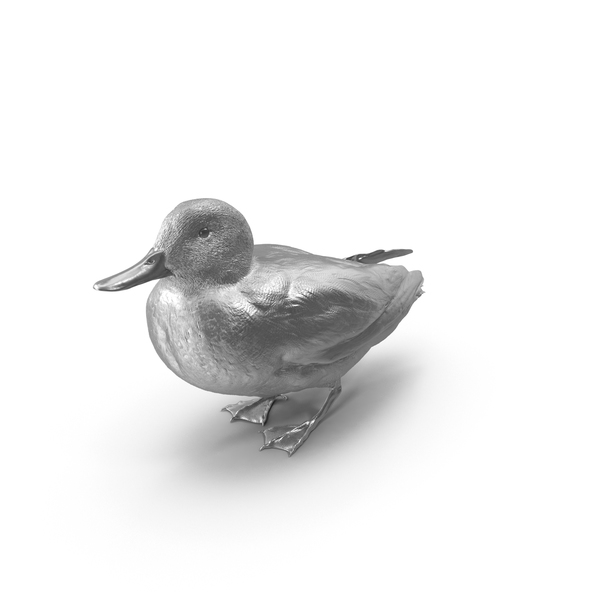 Eurasian Teal Silver PNG & PSD Images