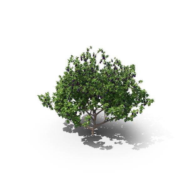 European Plum Tree PNG & PSD Images