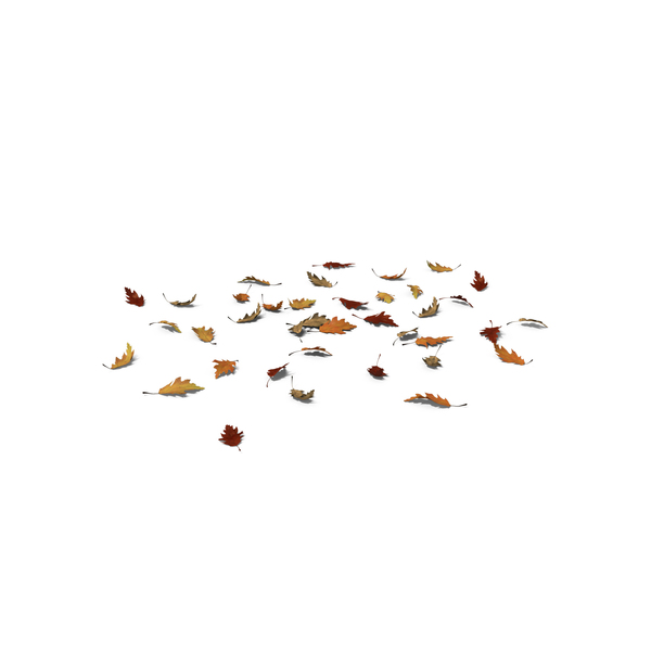 Leaf: Fall Oak Leaves PNG & PSD Images