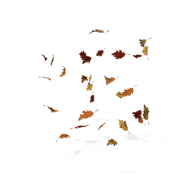 Fall Oak Leaves PNG & PSD Images