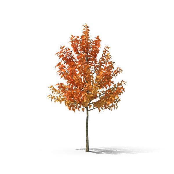 Fall Tree Object