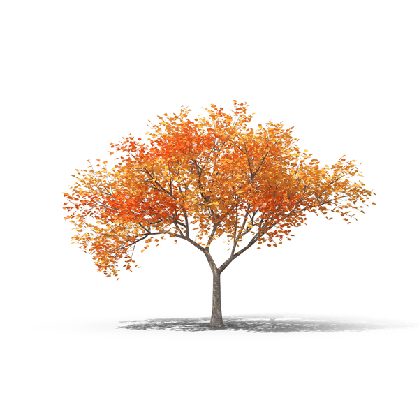 Fall Tree Object