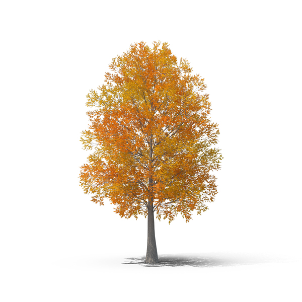 Deciduous: Fall Tree PNG & PSD Images
