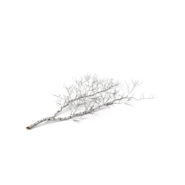 Log: Fallen Birch Tree PNG & PSD Images