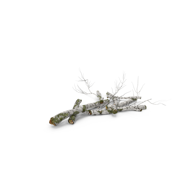 Fallen Birch Tree PNG & PSD Images
