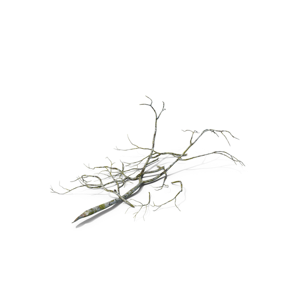 Fallen Tree Branch PNG & PSD Images