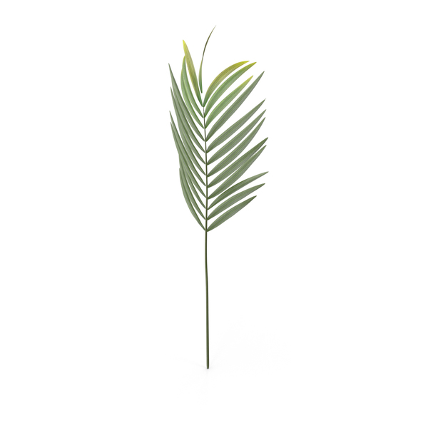 Faux Palm Leaf PNG & PSD Images