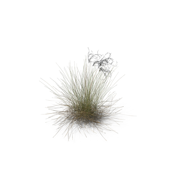 Plant: Feather Grass PNG & PSD Images