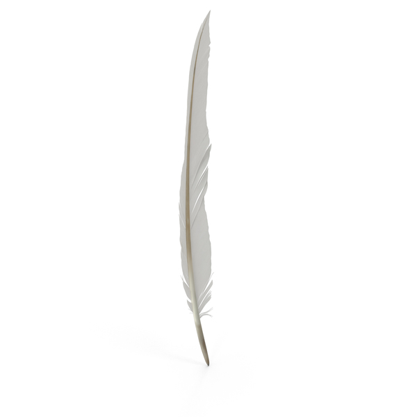 Quill: Feather PNG & PSD Images