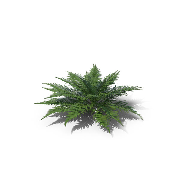 Fern PNG & PSD Images