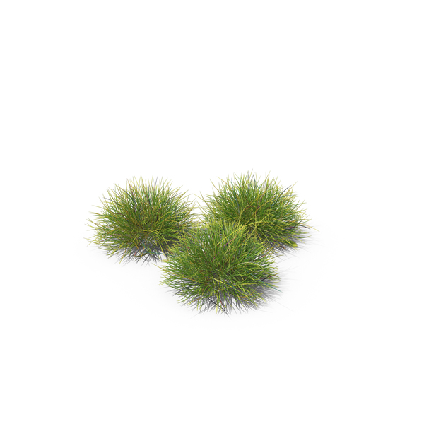 Grasses: Festuca Grass PNG & PSD Images