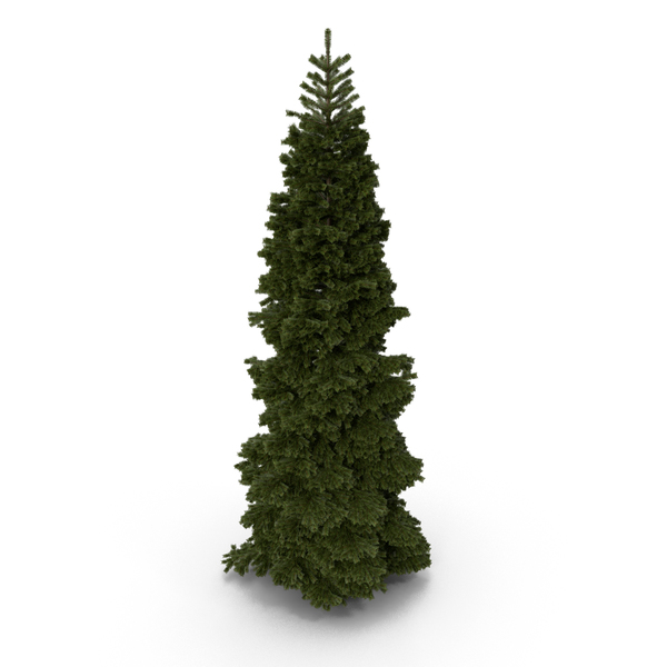 Fir Tree PNG & PSD Images