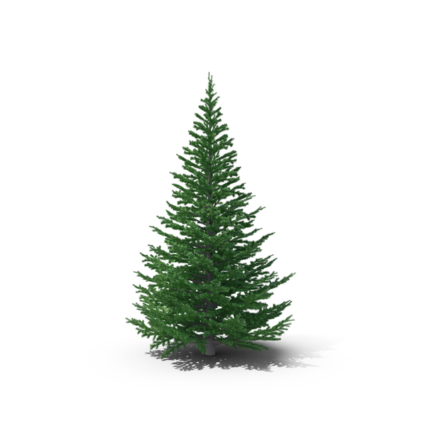 Tree: Fir PNG & PSD Images