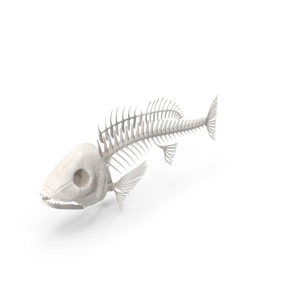 Fish Skeleton PNG & PSD Images